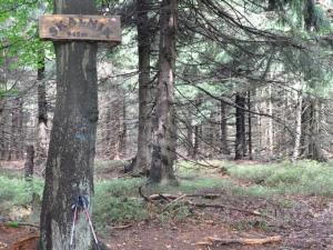 Skalnik (945 m n.p.m.) - najwyższy szczyt Rudaw Janowickich