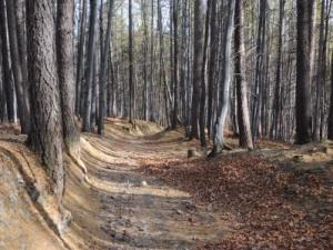 Zielonym szlakiem z Dębowca na Szyndzielnię