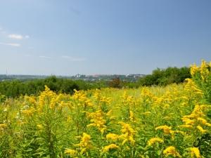 Panorama Sandomierza z Gór Pieprzowych