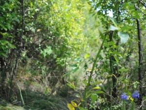 Kolczaste róże na szlaku czerwonym w Górach Pieprzowych