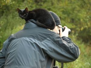 Kot - fotograf