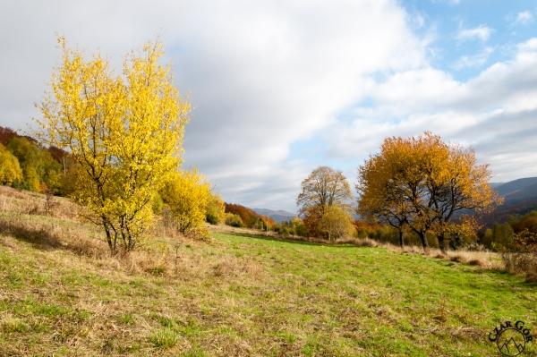 Pełna kolorów Połonina Caryńska jesienią