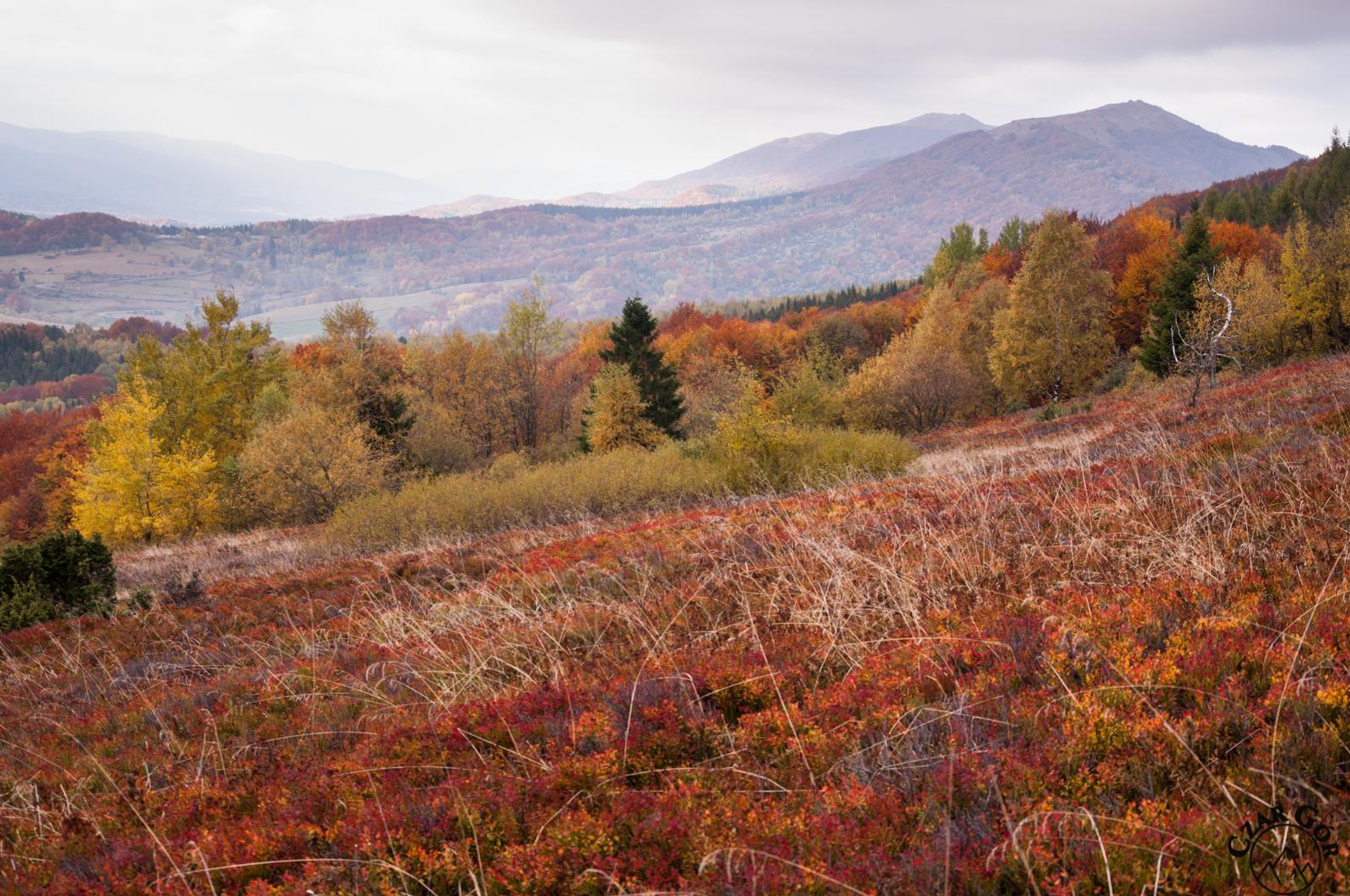 Kolorowa bieszczadzka jesień, w stronę Połoniny Wetlińskiej