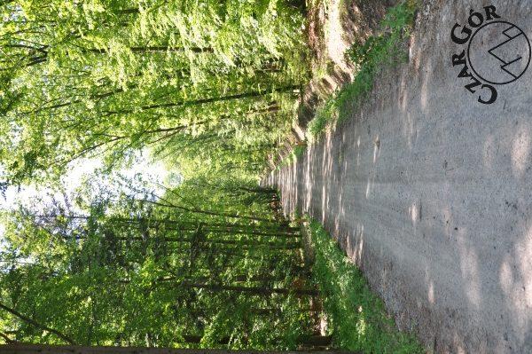 Droga prowadząca na Chełm Wschodni