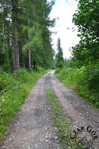 Droga wiodąca lasem