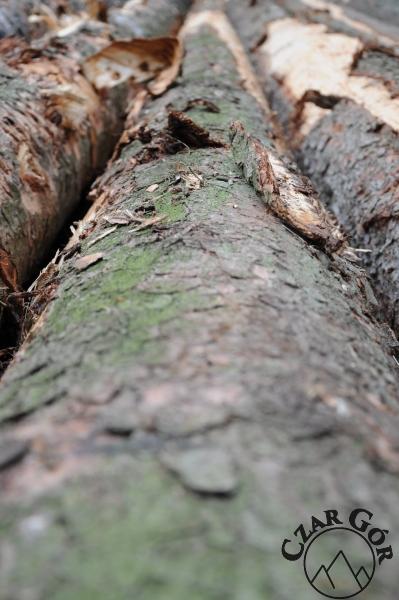 Ścinka drzew na szlaku