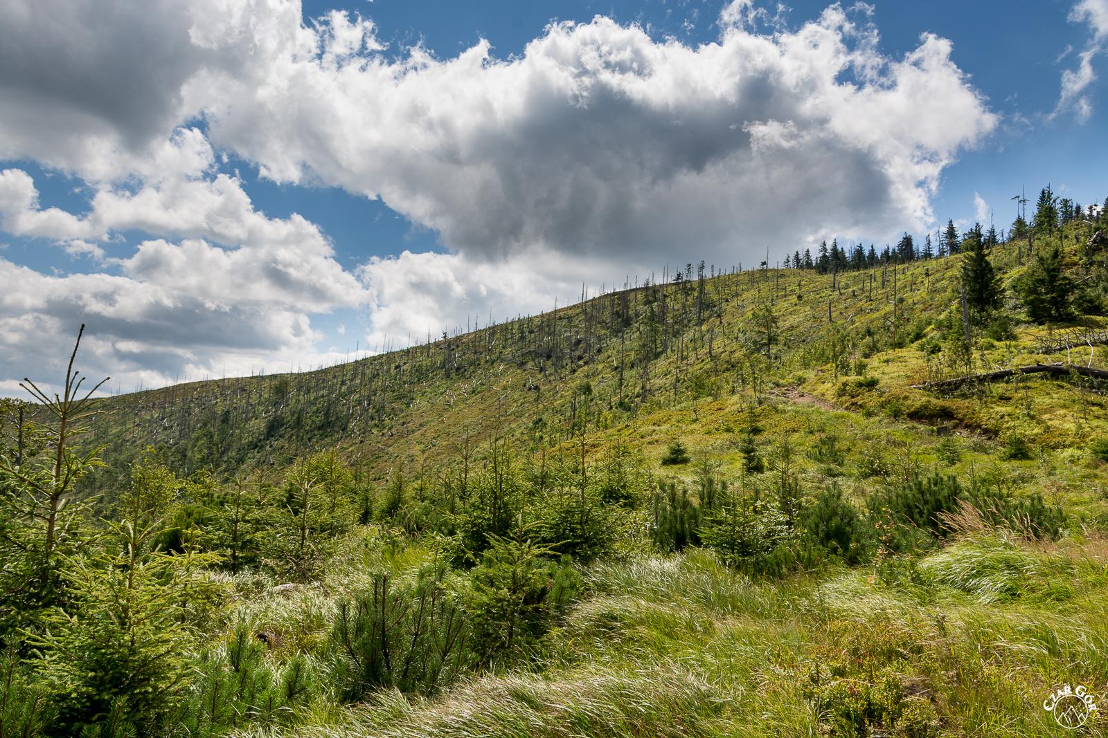 Bezdrzewne stoki Baraniej Góry