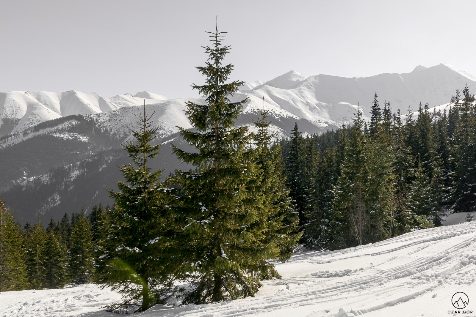 Tatry Zachodnie zimą. W stronę Jarząbczego Wierchu