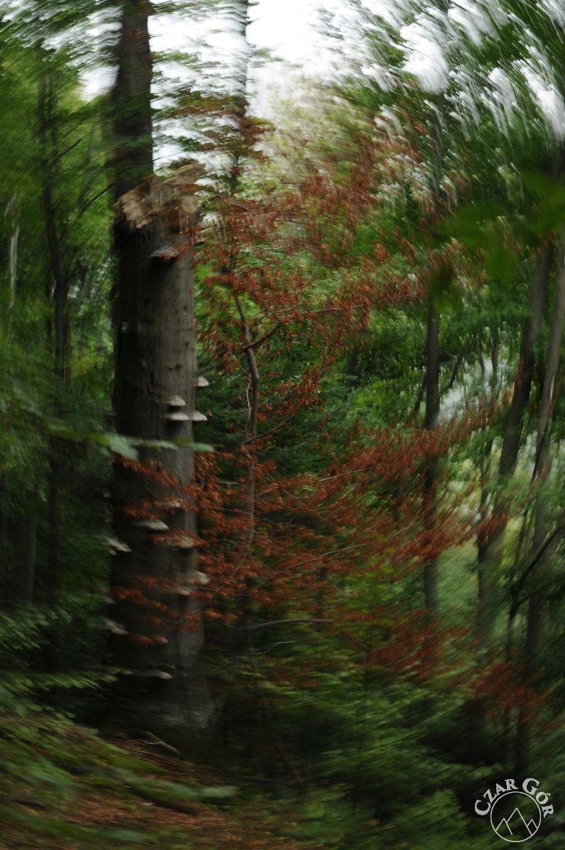 Leśne impresje