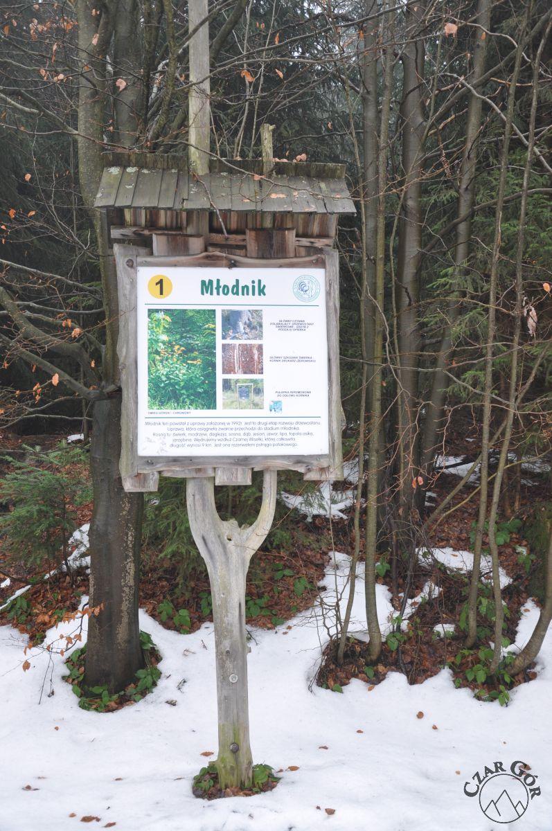 Na ścieżce dydaktyczno-przyrodniczej na Baranią Górę