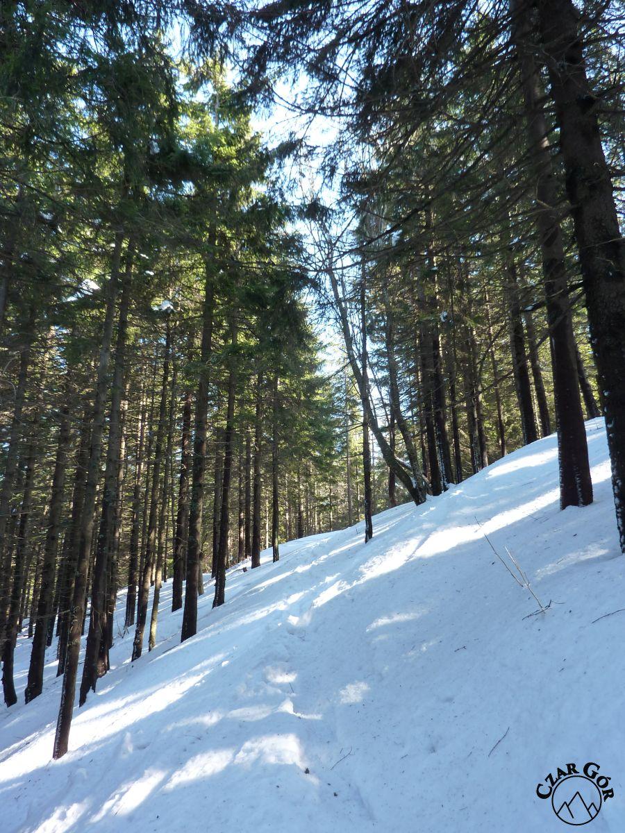 Na czerwonym szlaku z Hali Miziowej na Przełęcz Glinne