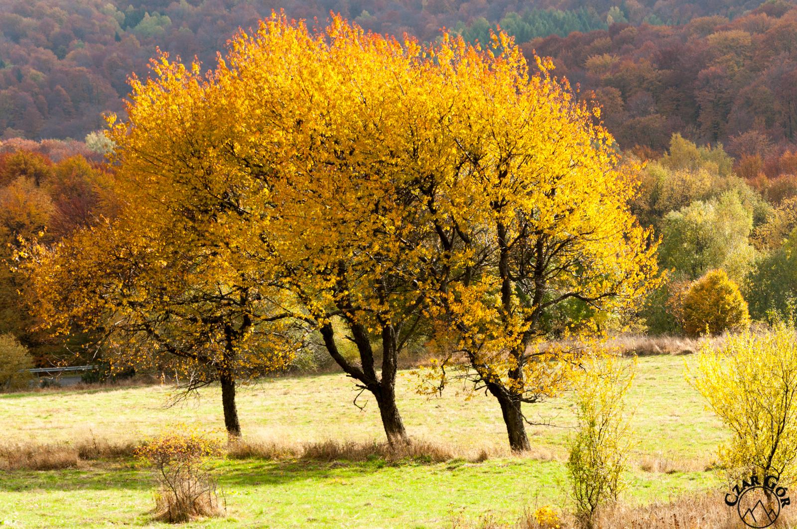 Kolorowo, jesiennie w Bieszczadach