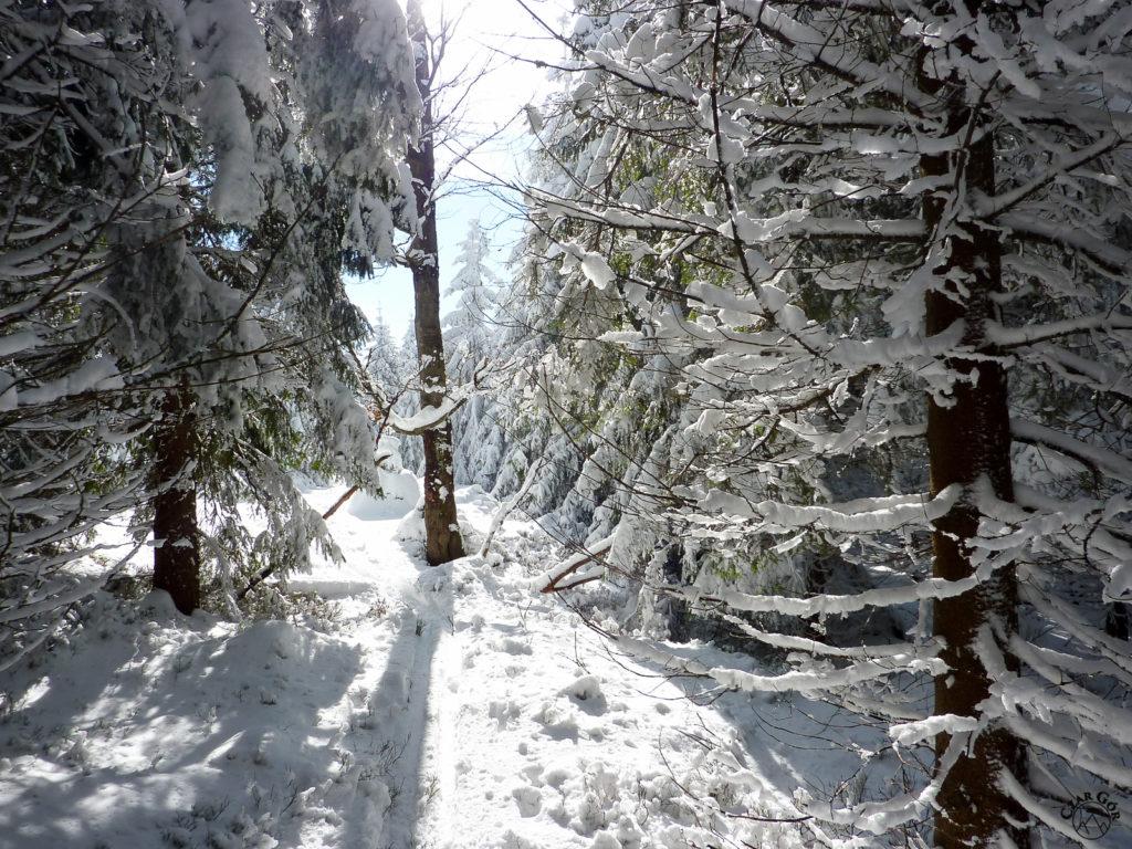 Idziemy w stronę Śnieżnika