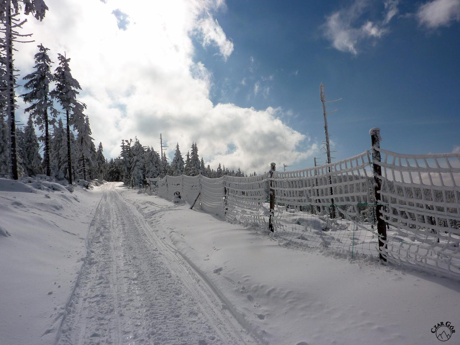 Czerwonym szlakiem w stronę Śnieżnika