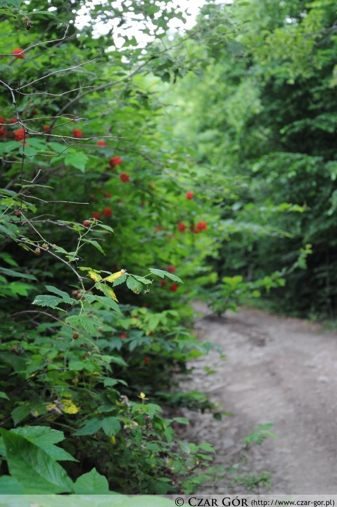 Na czerwonym szlaku na górę Żar