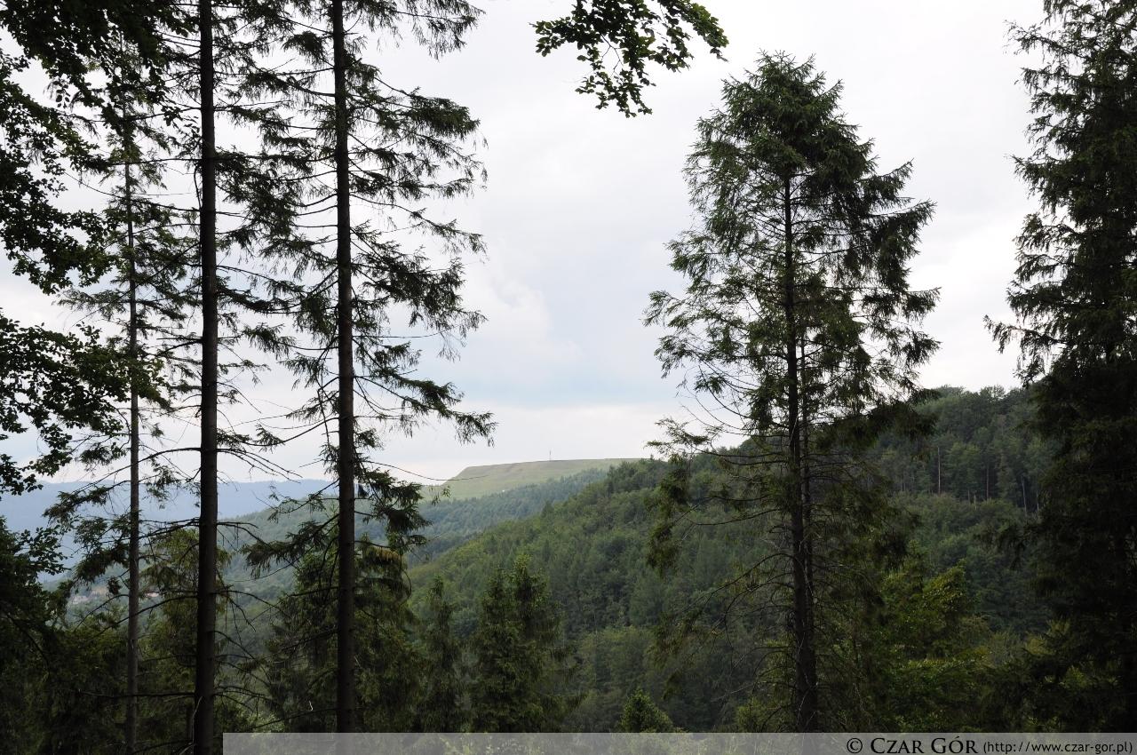 Góra Żar widziana z zielonego szlaku