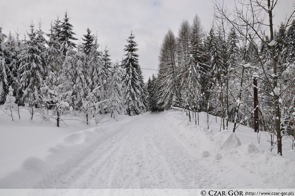 Czarnym szlakiem na Halę Rysiankę