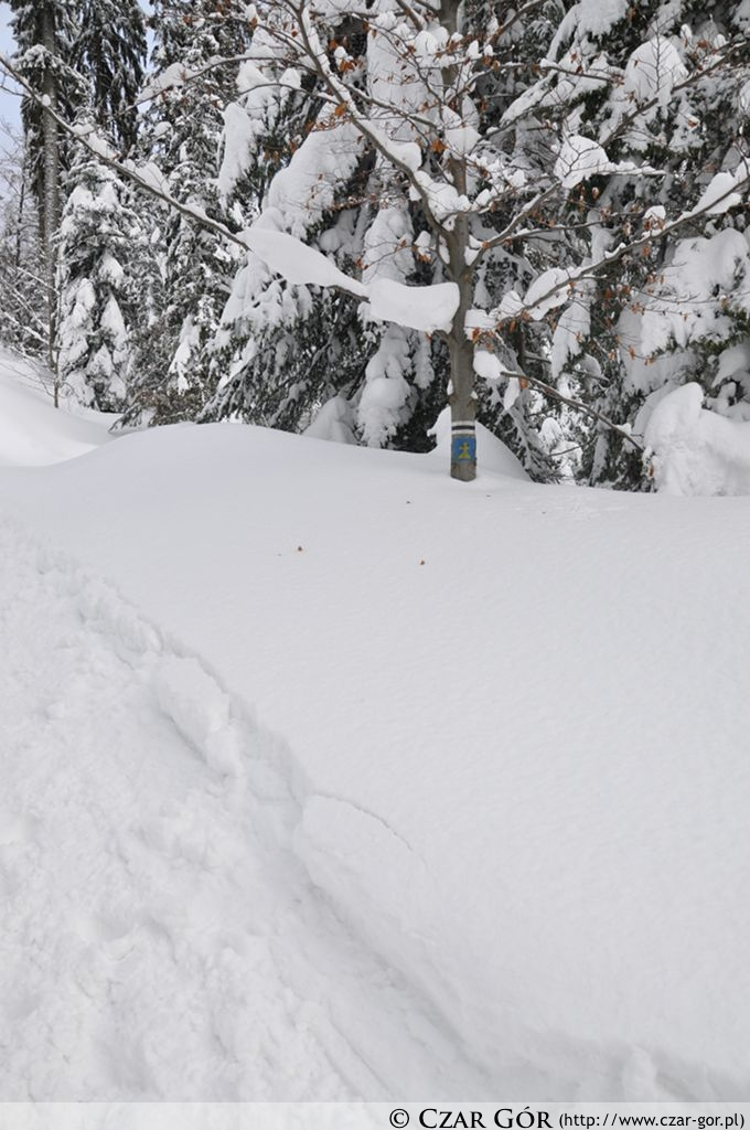 Śniegu na szlaku było sporo