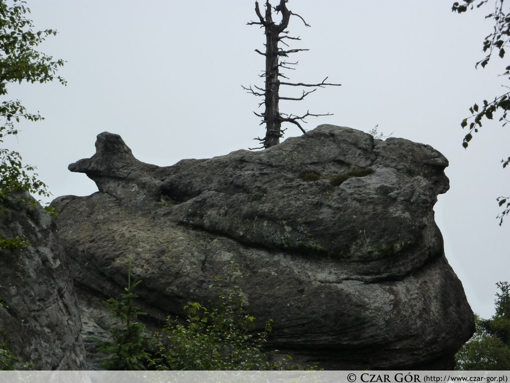 Kwoka - jedna z formacji skalnych Szczelińca Wielkiego
