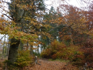 Jesień na szlaku - w pobliżu Grabowej