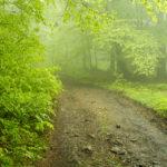 Leskowiec zgubiony w chmurach
