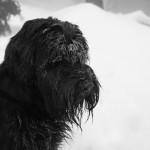 W śniegu i chmurze na Baraniej Górze