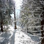 Zimowe Sudety i Śnieżnik (prawie) na skiturach