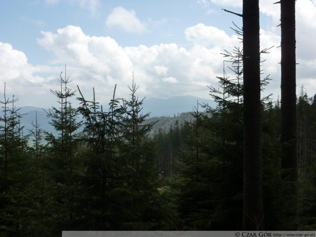 Szlak zielony na Halę Miziową. W stronę Królowej Beskidów - Babiej Góry