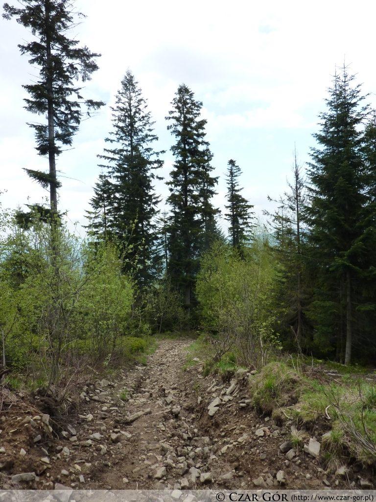 Na czarnym szlaku z Sopotni Wielkiej na Kotarnicę, dalej - Romankę