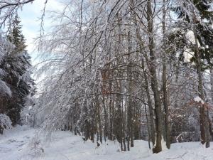 Zimą na szlaku