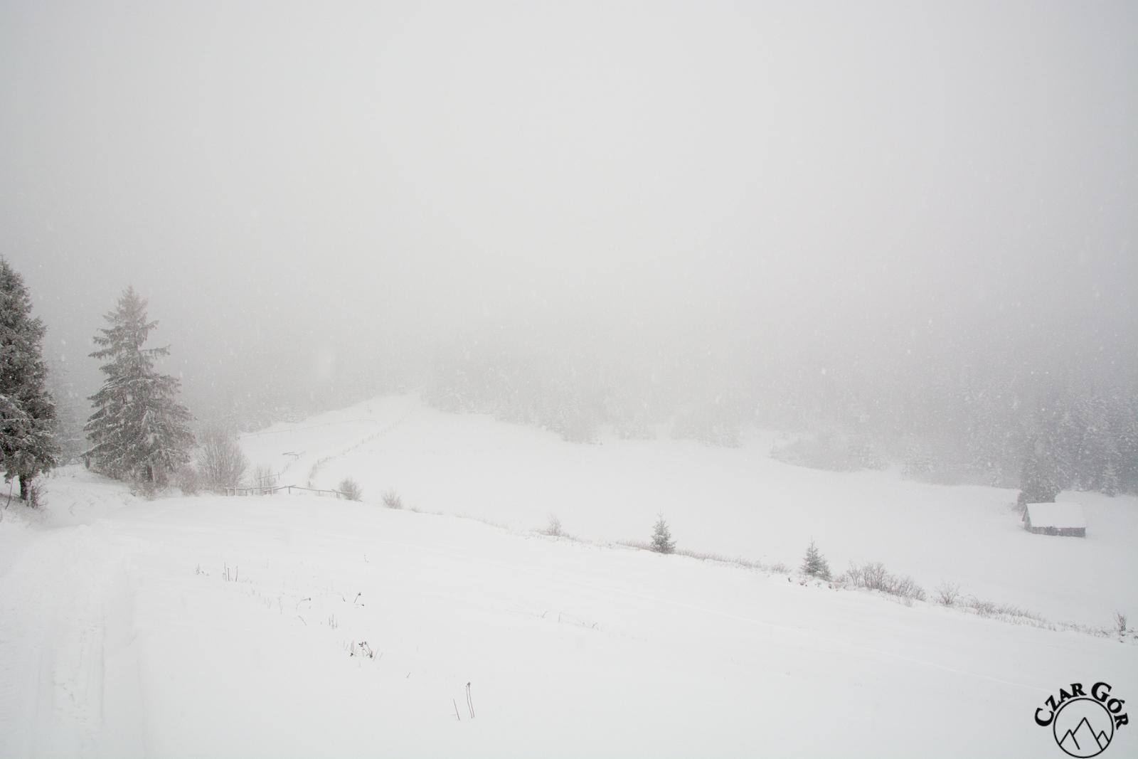 Żółtym szlakiem na Redykalny Wierch