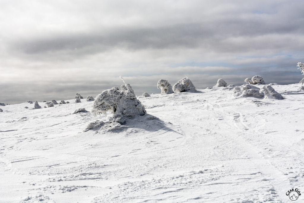 Na Pilsku w towarzystwie zimowych stworów