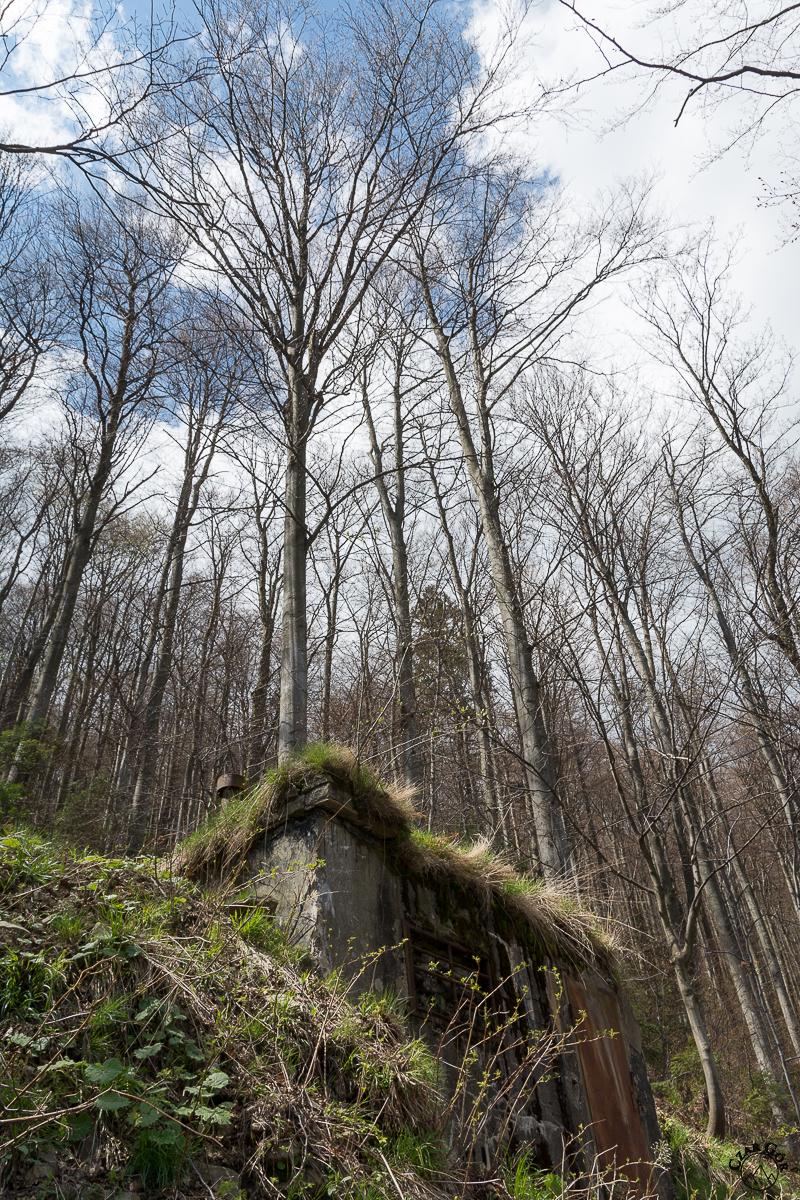 Szlakiem zielonym na Klimczok