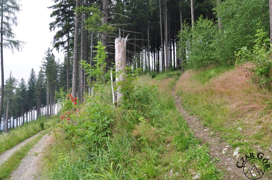Ścieżka prowadząca na szczyt Skopca