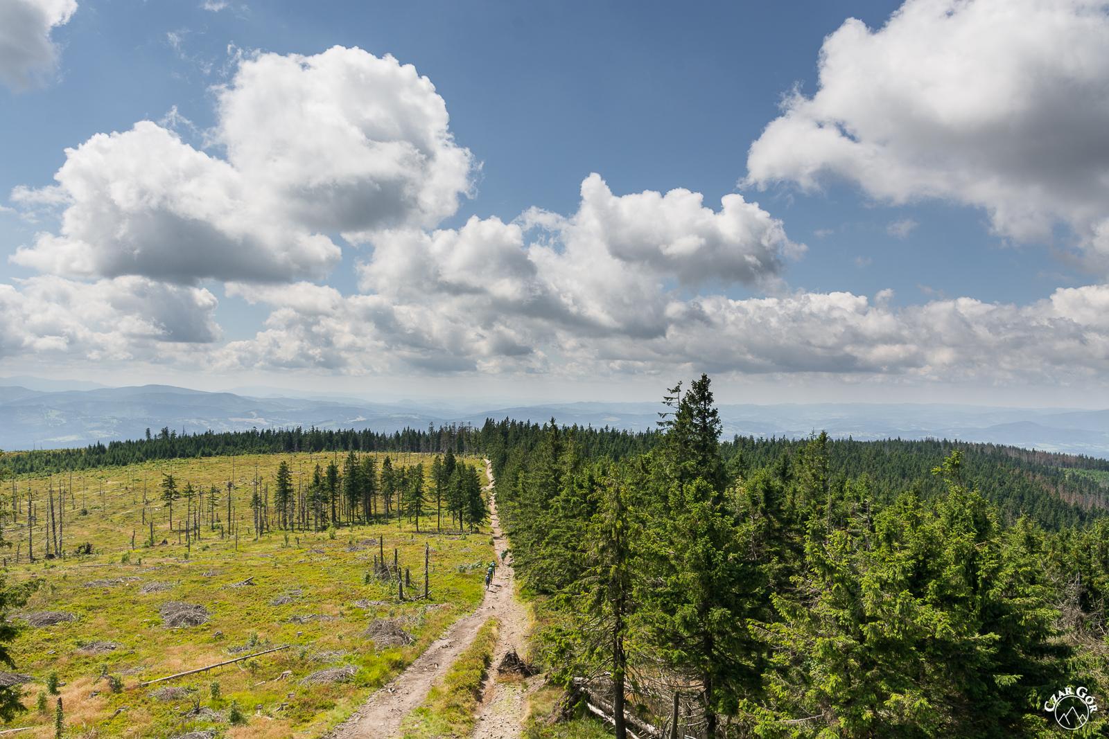 To był kiedyś gęsty las... Z Baraniej Góry