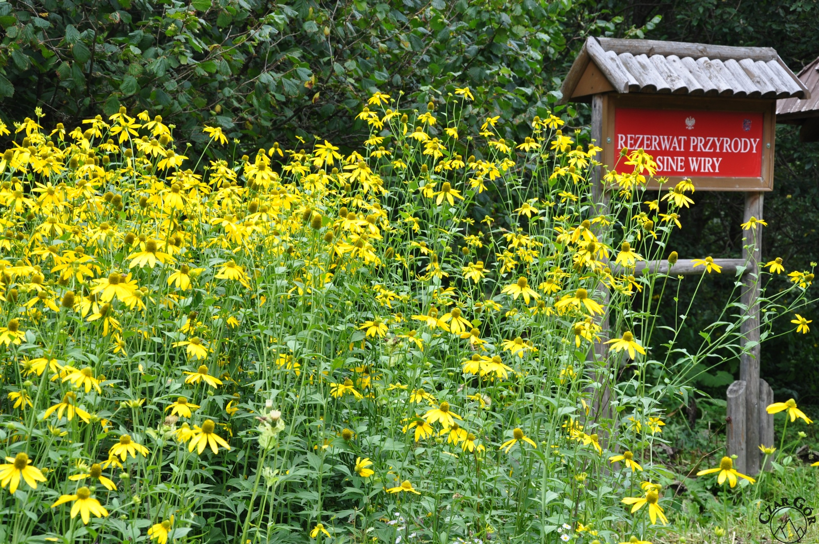 Dla nas wyjście, na niektórych wejście do rezerwatu przyrody