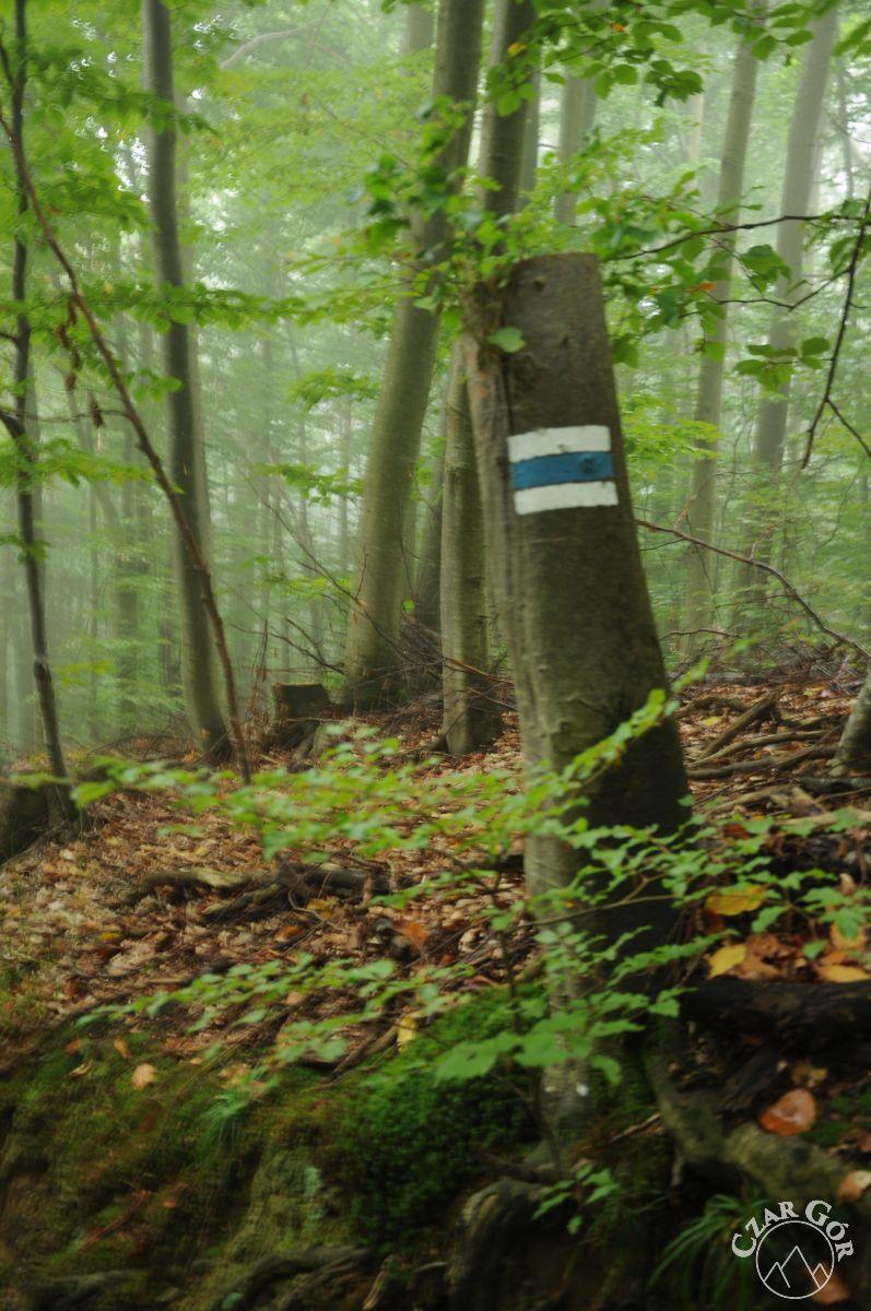 Zamglony las. Wycieczka do Chaty Socjologa