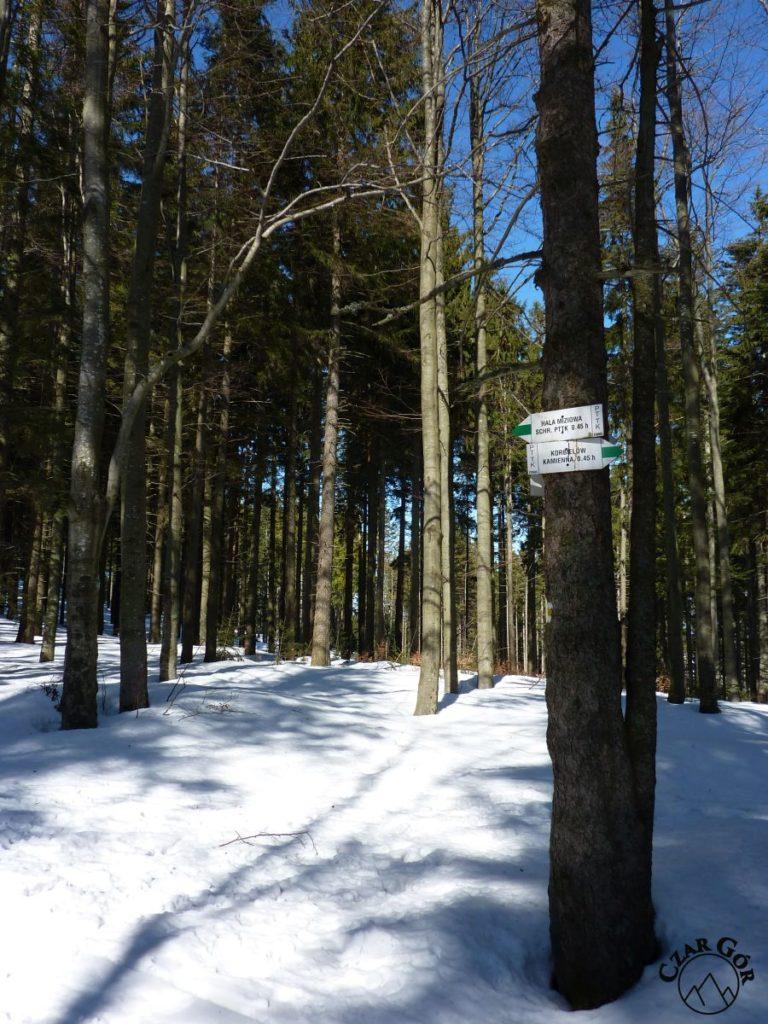 Zielony szlak na Halę Miziową. W połowie drogi