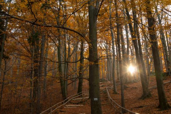 Jesienny szlak na Zamek Chojnik