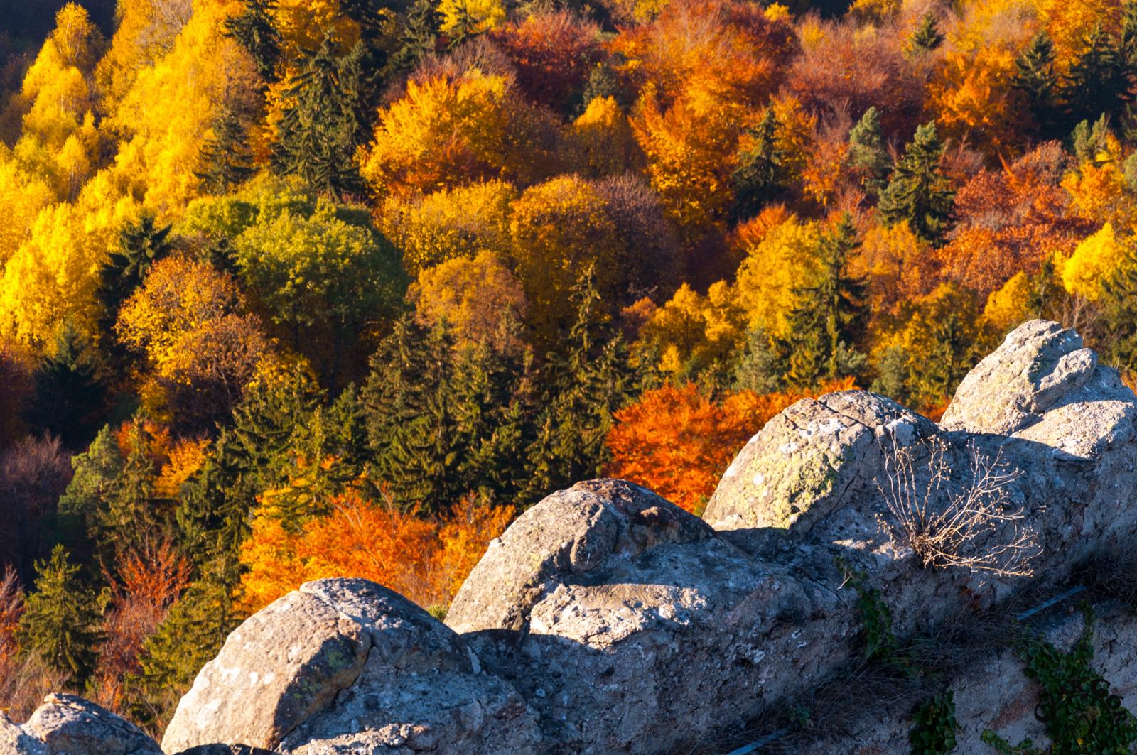 Kolorowa jesień na całego