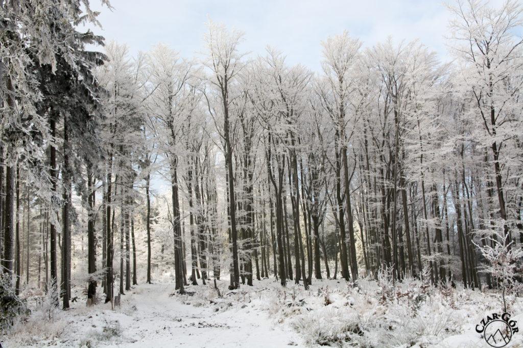 W góry zawitała zima