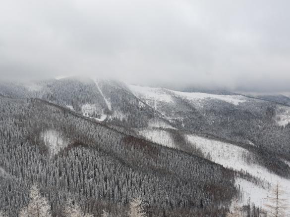 Zaśnieżone, tatrzańskie lasy