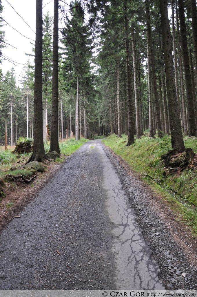 70% drogi to niestety asfalt