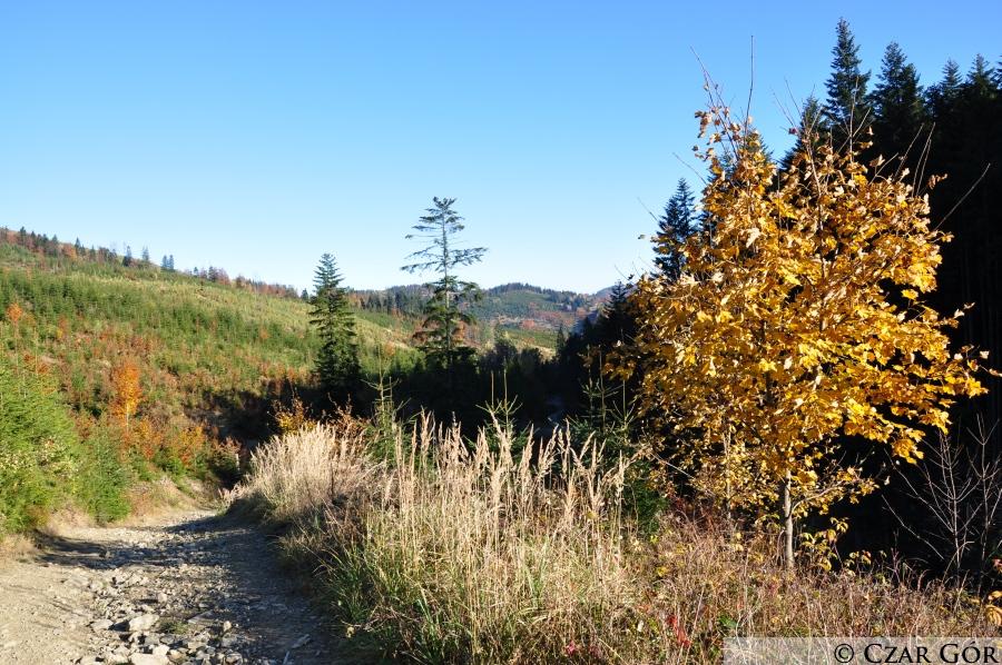 Na czarym szlaku z Żabnicy Skałki na Halę Boraczą
