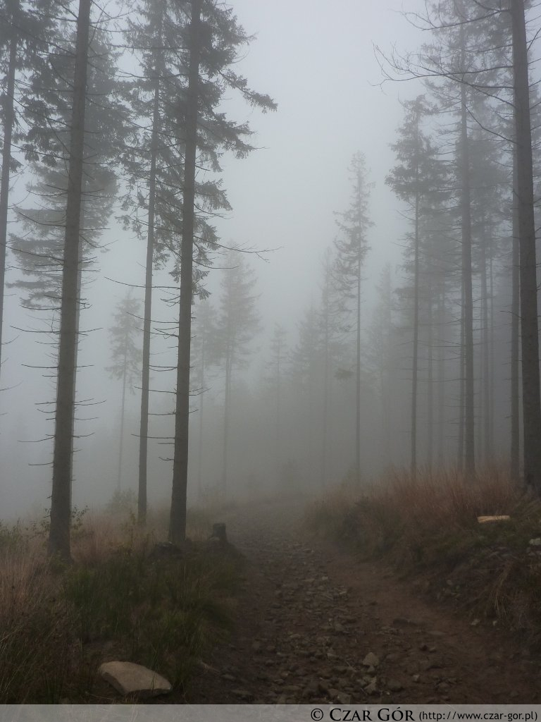 Wycieczka na Grabową w chmurze