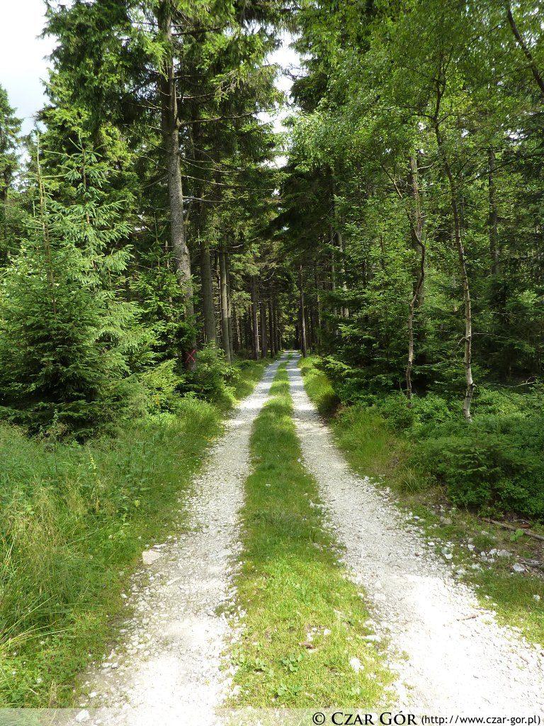 Droga szlakiem niebieskim