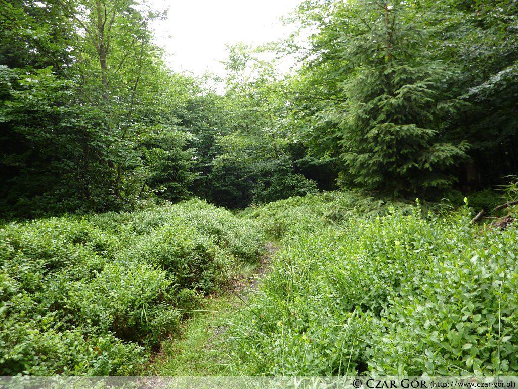 Szlakiem zielony na Iwinkę