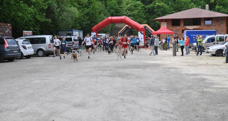 Biegiem przez Borówkową, czyli Puchar Polski 2013 w Dogtrekkingu