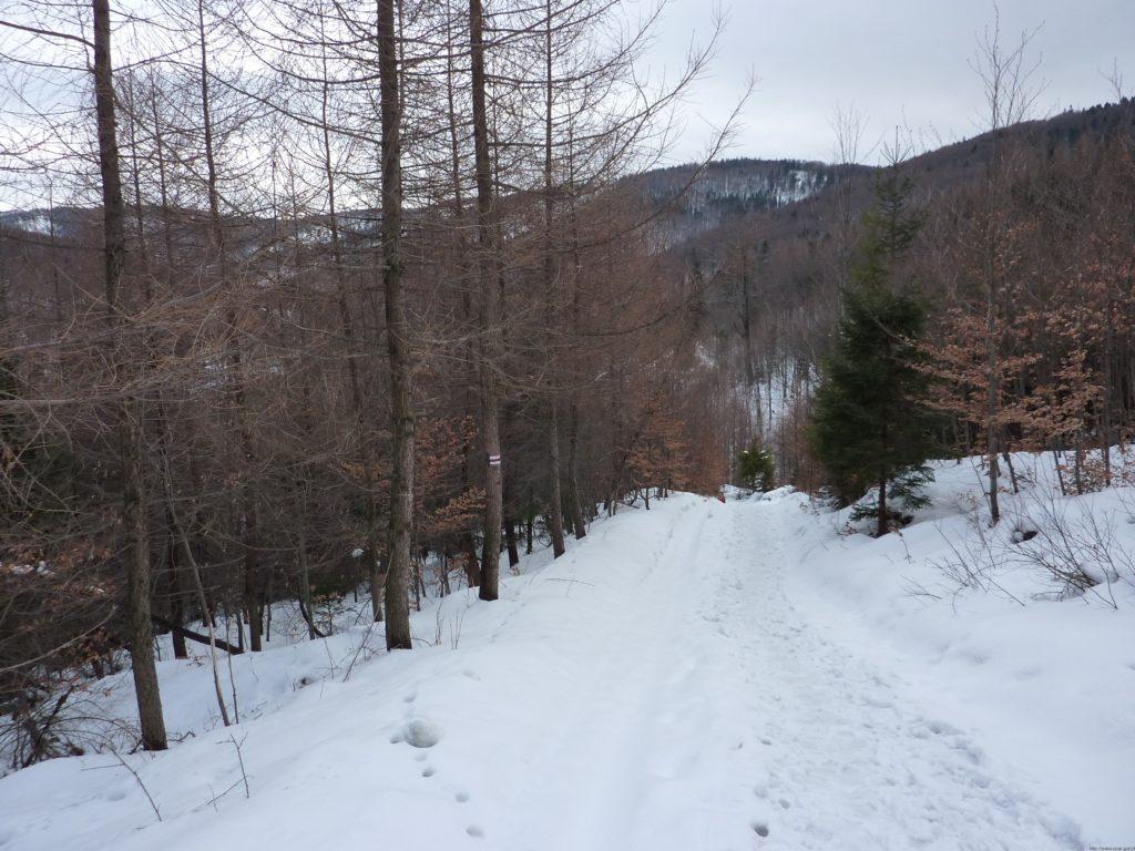 Na szlaku w stronę Łazka (713 m n.p.m.)