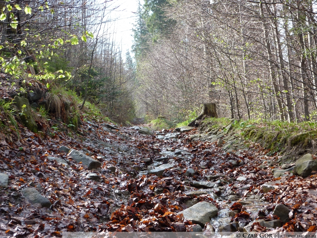 Na zielonym szlaku z Sopotni Wielkiej na Halę Miziową